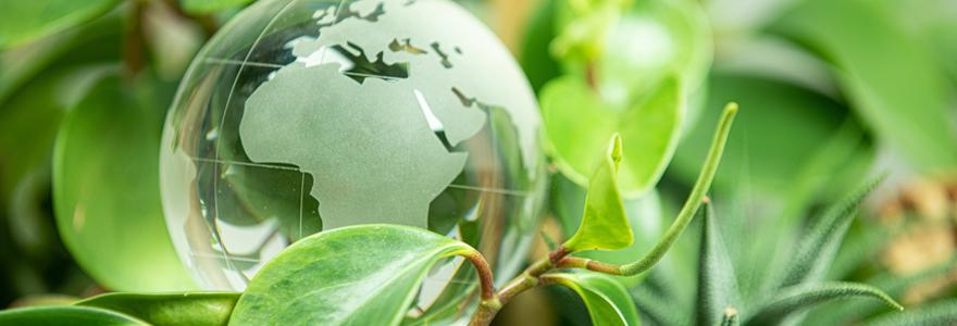 Mastère en management de l'environnement